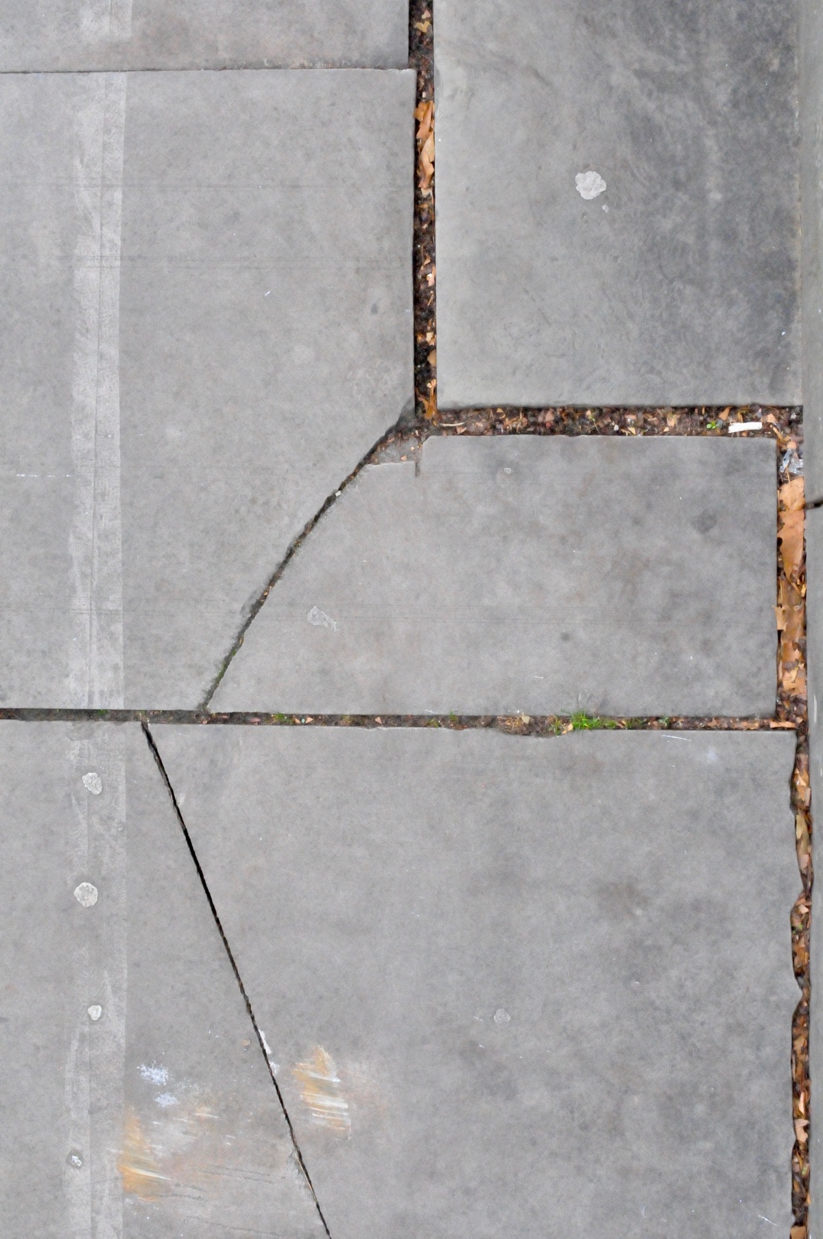 paving stones 3 (beauty is in the streets)